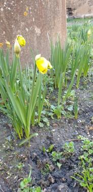 jolie fleur Les clés de l'Envol