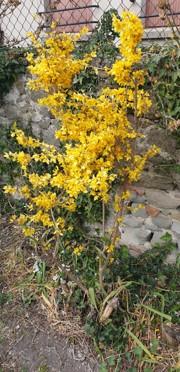 fleur jaune Les clés de l'Envol