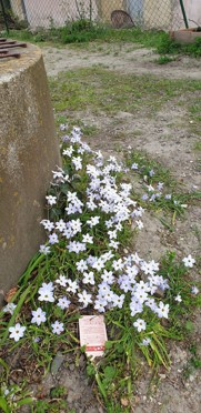 fleur jardin Les clés de l'Envol